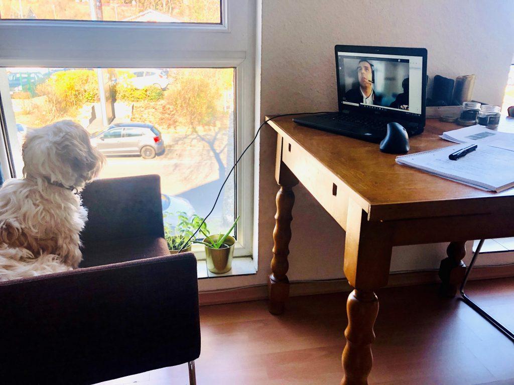 Und wer geht mit mir Gassi? - Klare Regeln, Aufgabenverteilung und Pausen tragen zu einem harmonischen und effektiven Arbeiten im HomeOffice bei.